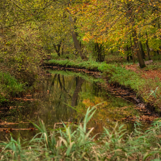 """Woodland wetlands in autumn iv."" stock image"