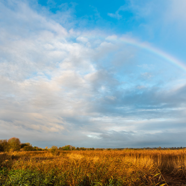 """Rainbow over golden marshes."" stock image"