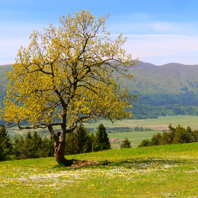 """""""Spring at the Slivnica mountain"""" stock image"""