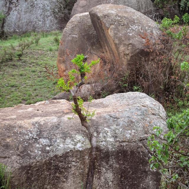 """""""Sibebe Rock"""" stock image"""