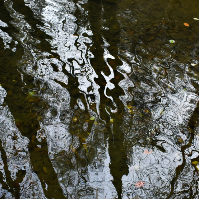 """""""Reflecting on Water #3"""" stock image"""