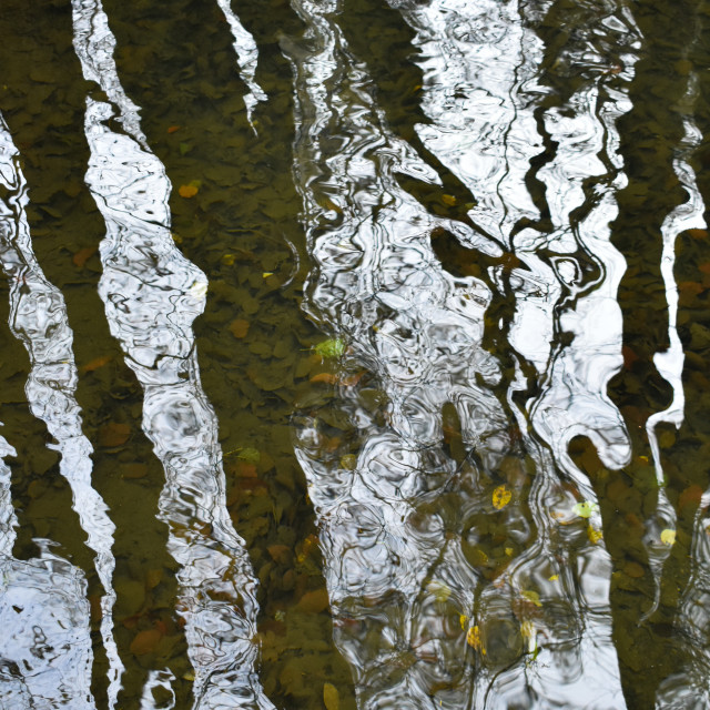 """""""Reflecting on Water #5"""" stock image"""