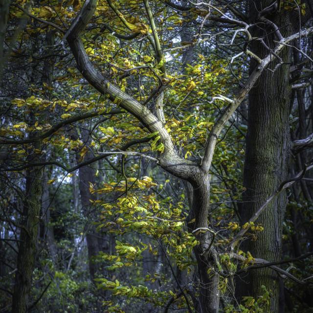 """Autumn Colour At Gravel Wood"" stock image"