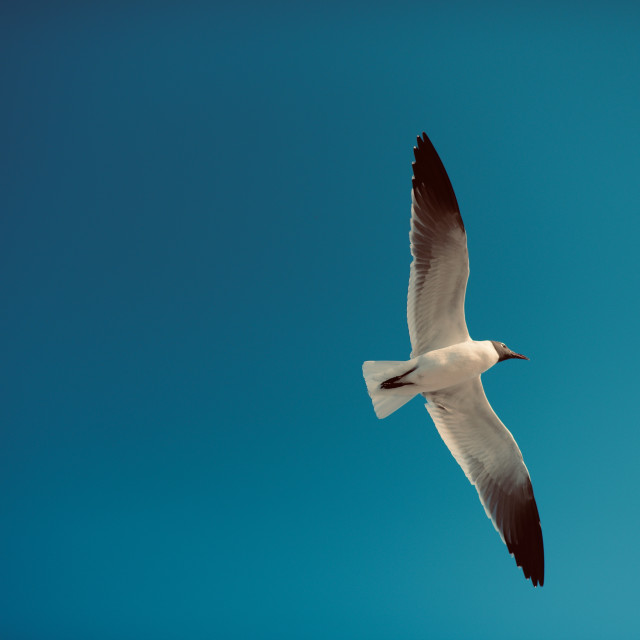 """The Gull"" stock image"