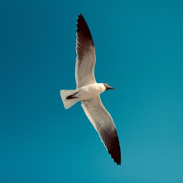 """The Gull 3.0"" stock image"