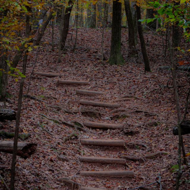 """""""Steps Along a Trail"""" stock image"""