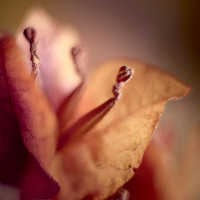 """""""dried flowers, artistic macro photography"""" stock image"""