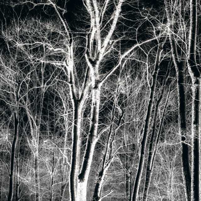 """A Winter's Night"" stock image"