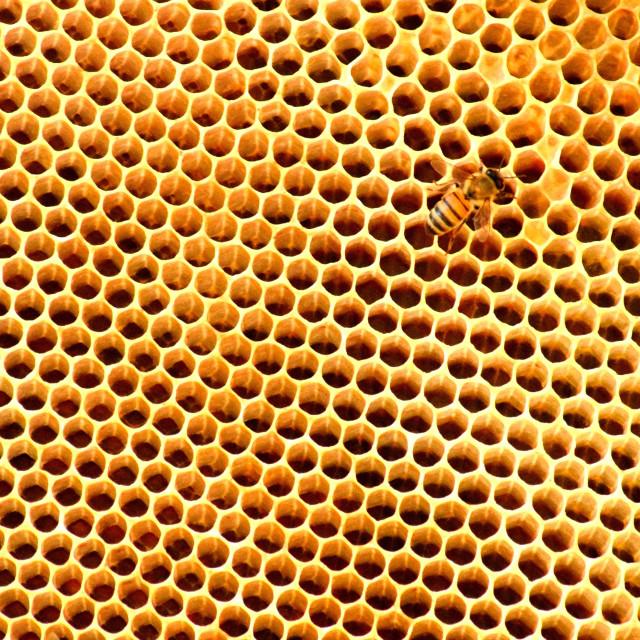 """""""Bee on Honeycomb"""" stock image"""
