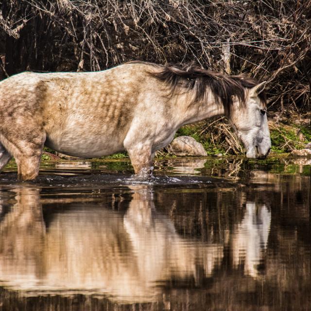 """Wild Reflections"" stock image"