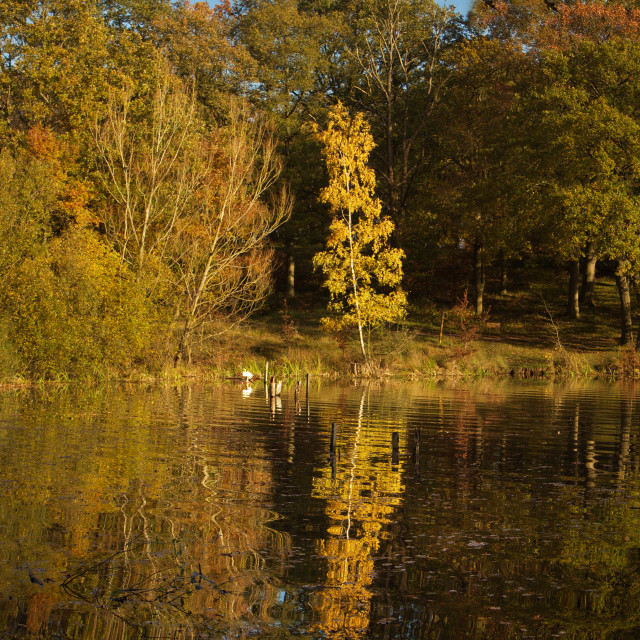 """""""Autumn Colours, Thorndon Country Park."""" stock image"""