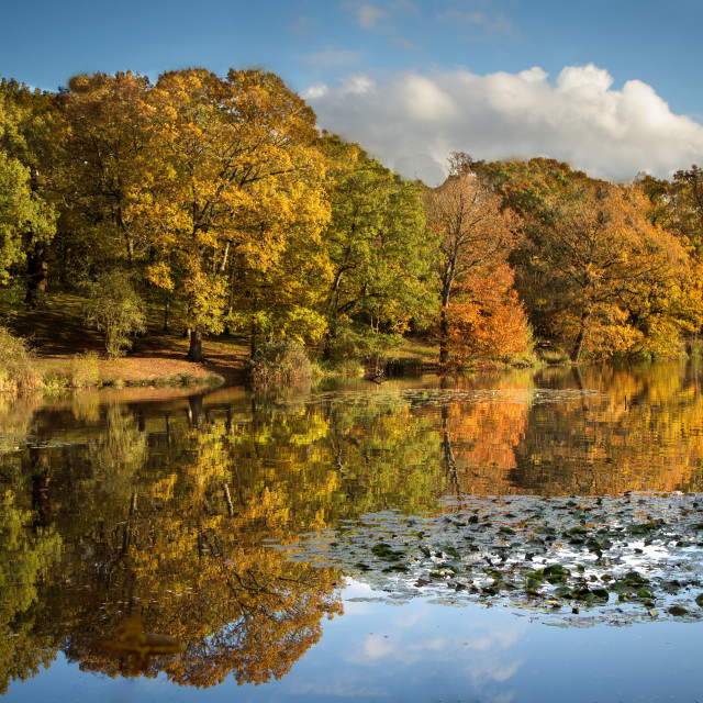 """""""Autumn colours,Thorndon Country Park."""" stock image"""