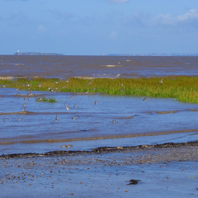 """Birds taking flight Sand Bay Somerset"" stock image"
