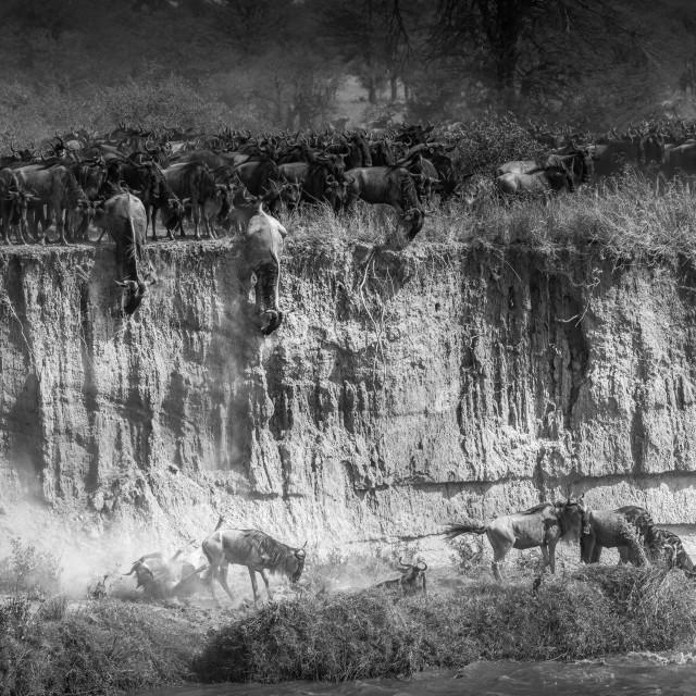 """Gnu Migration -Tanzania"" stock image"