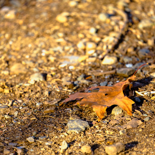 """Fallen, broken and dry leaf"" stock image"