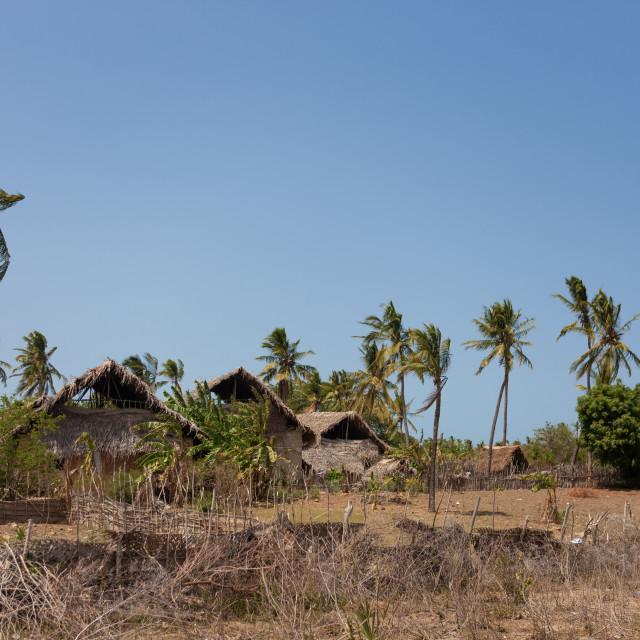 """""""Traditional swhaili village, Lamu County, Siyu, Kenya"""" stock image"""