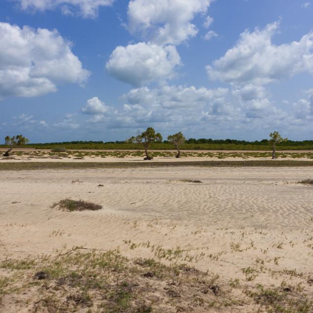 """""""Landscape with sand and trees, Lamu County, Siyu, Kenya"""" stock image"""