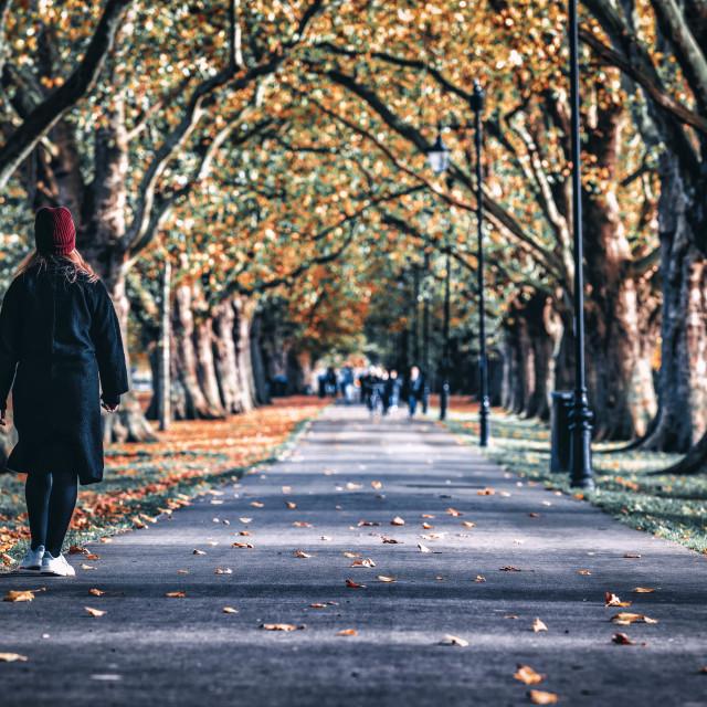"""Jesus Green footpath, Cambridge UK."" stock image"