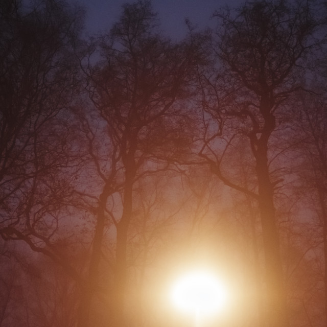 """Night Walk At Pispala XIV (Trees)"" stock image"