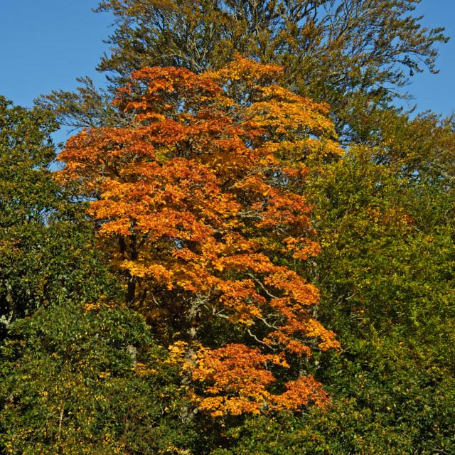 """""""Autumn Deeside Potarch qax8124jhp"""" stock image"""