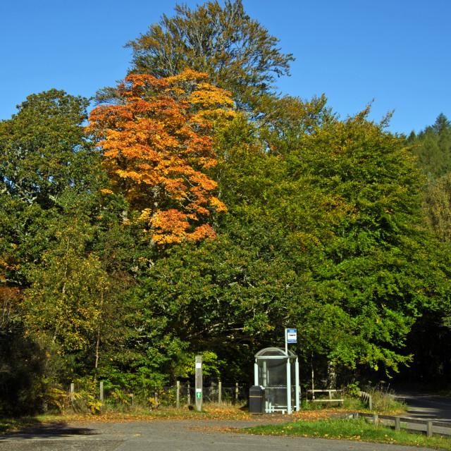 """Autumn Deeside Potarch"" stock image"