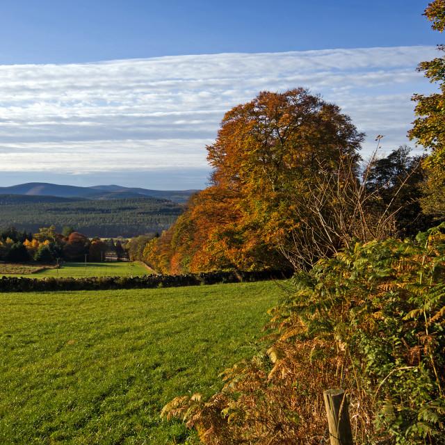 """""""Deeside Autumn"""" stock image"""