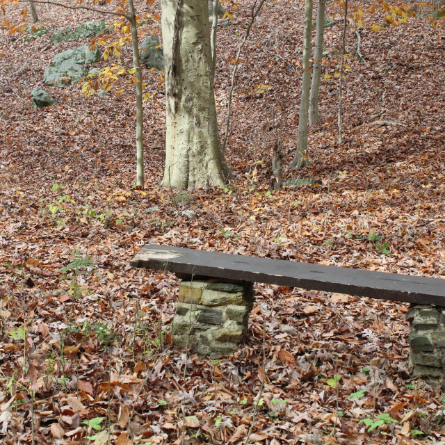 """a bench in the woods"" stock image"
