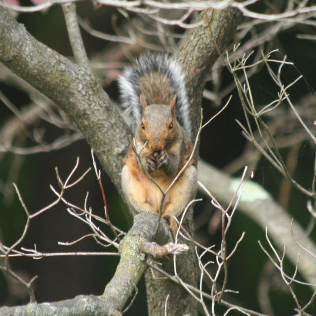 """""""squirrel's looking at you"""" stock image"""