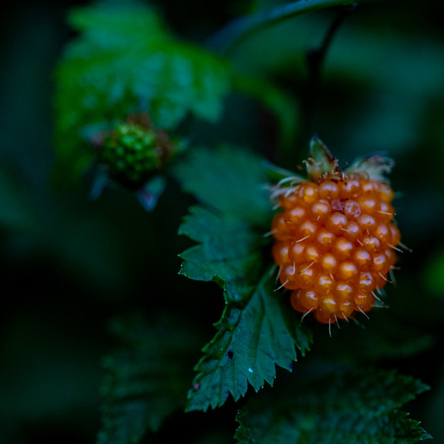 """Juicy Fruit"" stock image"