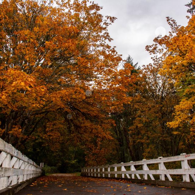 """Fall at the bridge."" stock image"