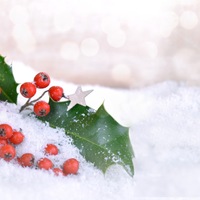 """""""leaf and red berries of holly in the snow on blur light backgrou"""" stock image"""