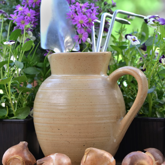 """""""gardening tools in a water jug placed on a table with flowers and bulbs"""" stock image"""