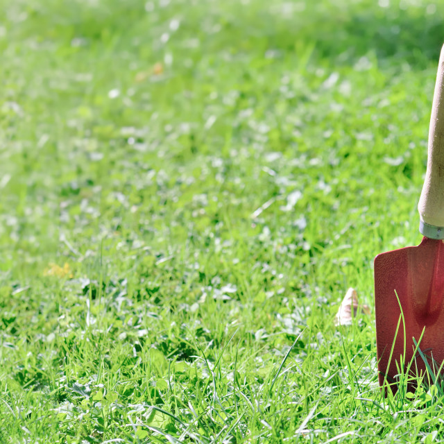 """""""red gardening tools planting in grass in garden in panoramic view"""" stock image"""