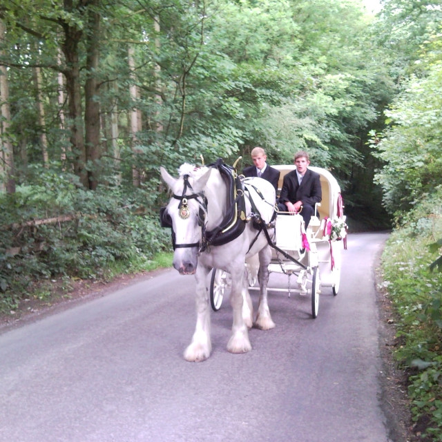 """""""Homeward Bound by horse and carriage"""" stock image"""