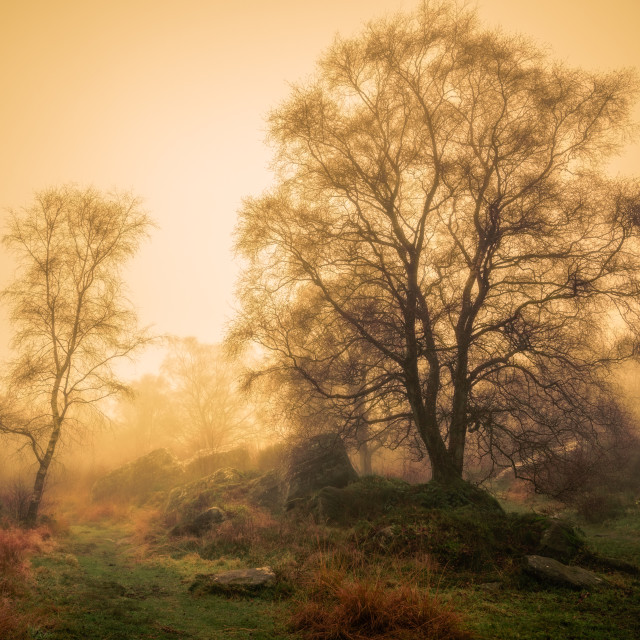 """Trees in Mist at Brimahm Rocks"" stock image"