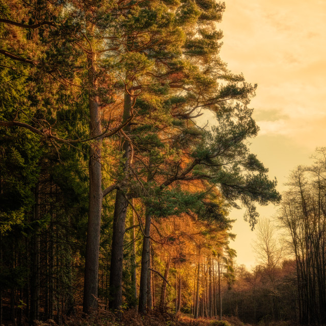"""Spa Gill Wood"" stock image"