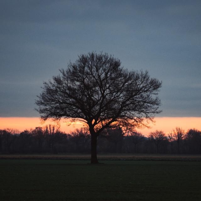 """""""Herbstmorgen"""" stock image"""