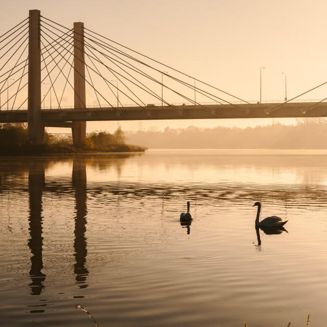 """swam on the river, sunrise, bridge in background"" stock image"