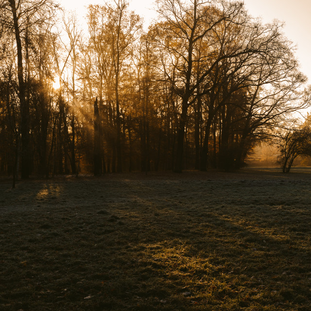 """""""sunrise in the park and fog, the beginning of winter"""" stock image"""