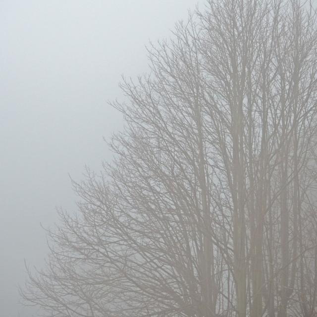 """Misty Autumn Morning"" stock image"