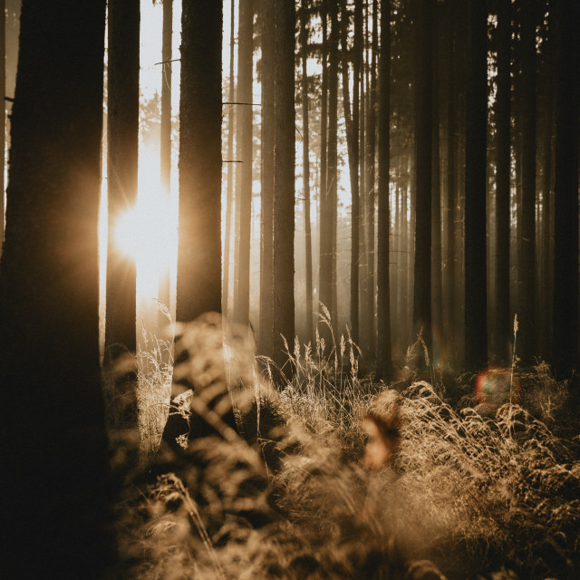 """Morning in the forest"" stock image"