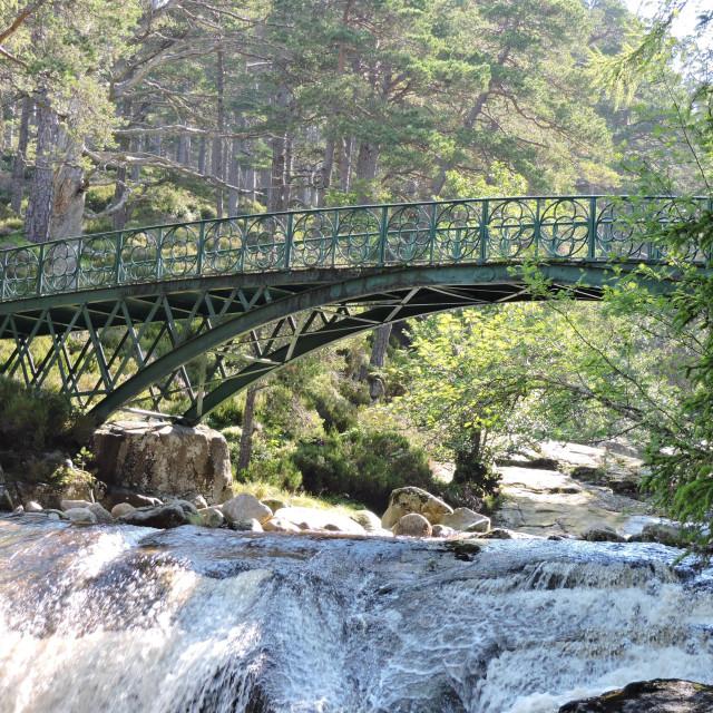"""Ballochbuie Woodland Bridge Scotland"" stock image"