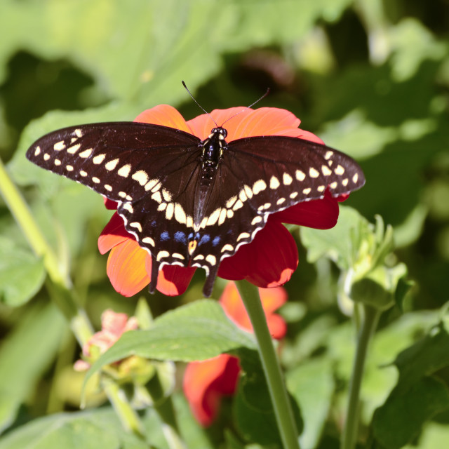 """""""Butterfly 2 - Fanwood Nature Center"""" stock image"""