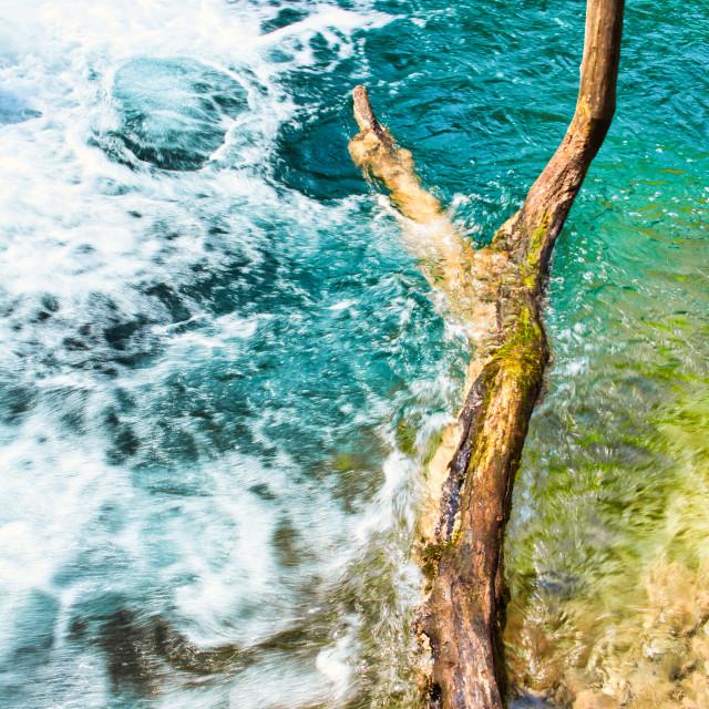 """Large Bare Tree Limb Hanging Over Plitvice Lakes"" stock image"