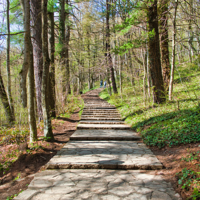 """""""Rock Paved Footpath at Plitvice Lakes National Park"""" stock image"""