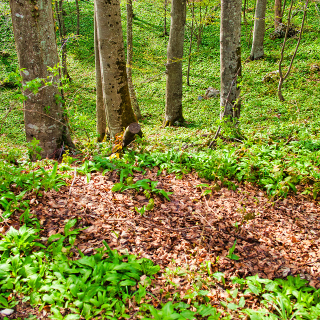 """""""Tree Area At Plitvice Lakes National Parl"""" stock image"""