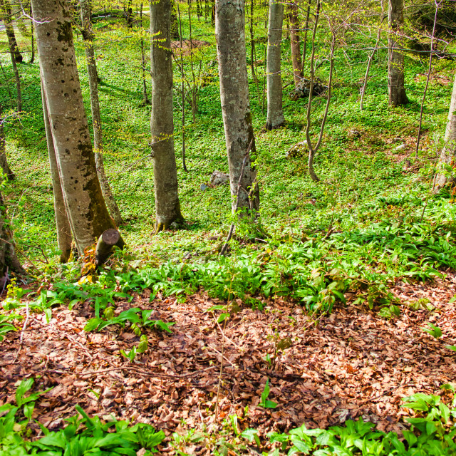"""""""Tree Area With Fallen Autumn Colored Leaves"""" stock image"""