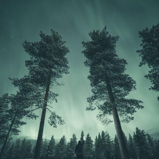 """Green mist"" stock image"