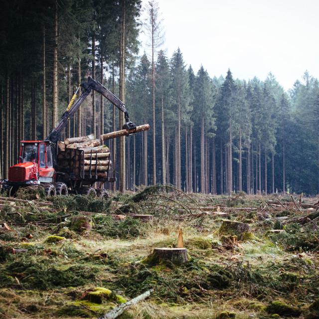 """""""Der Harz - Reise durch das Waldsterben (Dying Forest in Gemany)"""" stock image"""