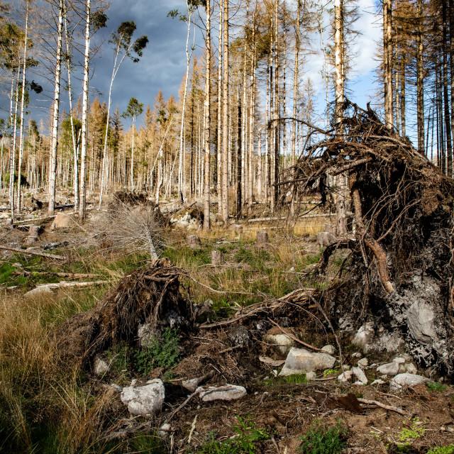"""""""Der Harz - Reise durch das Waldsterben"""" stock image"""